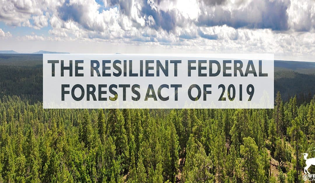 Congress Reintroduces The Resilient Federal Forests Act of 2019